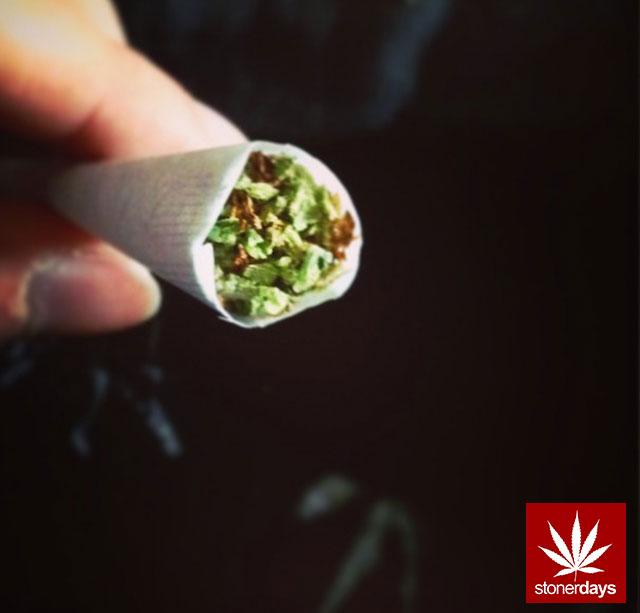 Stay Blazed StonerDays Marijuana Weed (233)