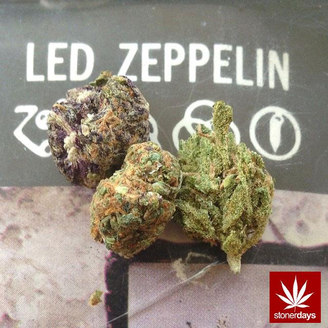 Stay Blazed StonerDays Marijuana Weed (255)