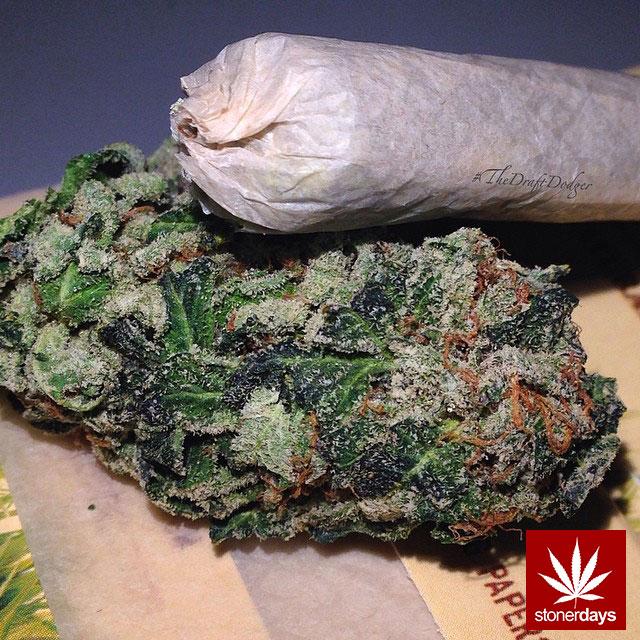 stoners marijuana pot weed stoned sexy stoner (108)