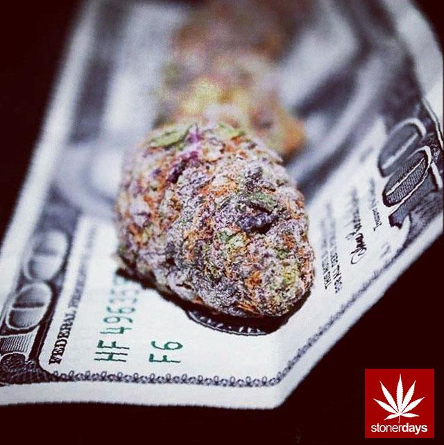 stoners marijuana pot weed stoned sexy stoner (118)