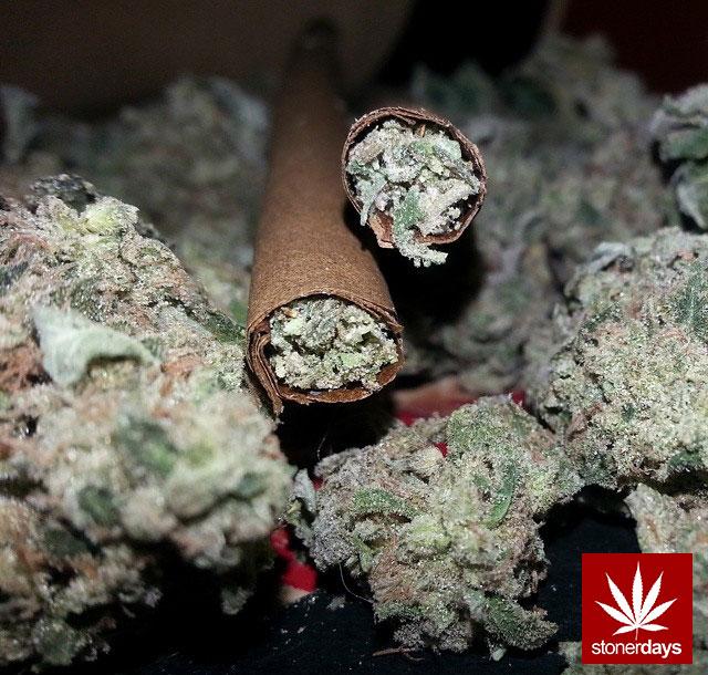 stoners marijuana pot weed stoned sexy stoner (135)