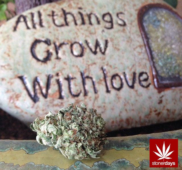 stoners marijuana pot weed stoned sexy stoner (136)