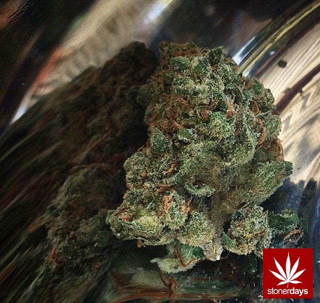 stoners marijuana pot weed stoned sexy stoner (138)