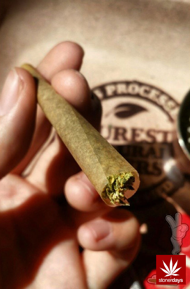 stoners marijuana pot weed stoned sexy stoner (140)