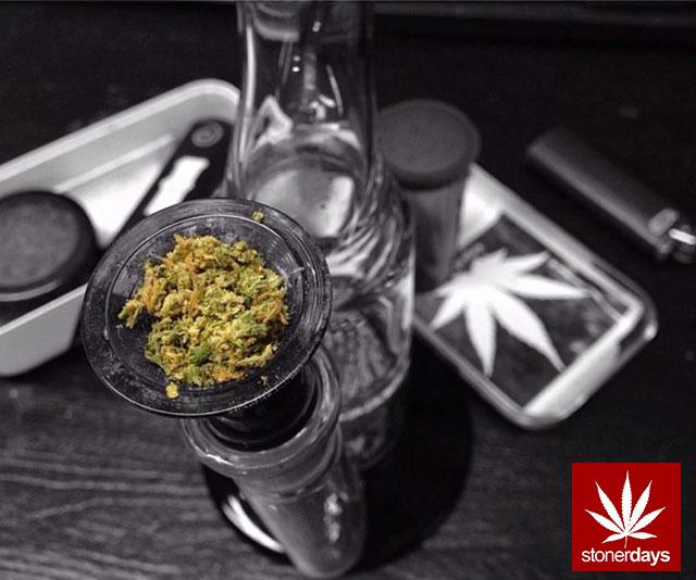 stoners marijuana pot weed stoned sexy stoner (150)