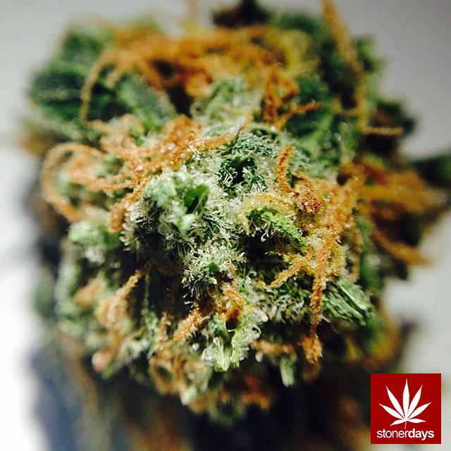 stoners marijuana pot weed stoned sexy stoner (164)