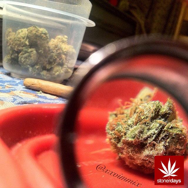 stoners marijuana pot weed stoned sexy stoner (165)