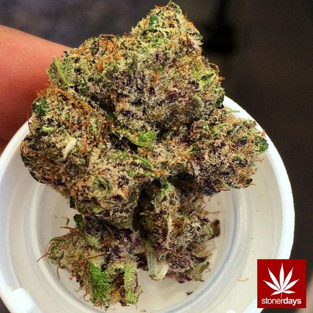 stoners marijuana pot weed stoned sexy stoner (168)