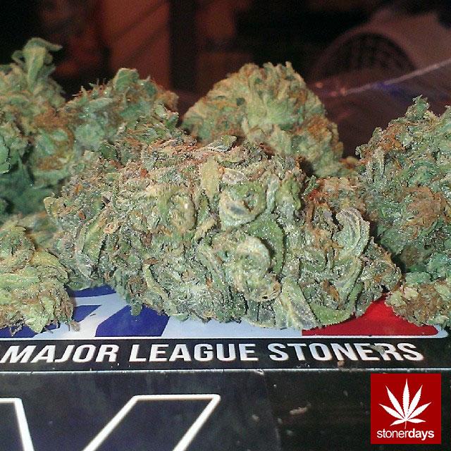 stoners marijuana pot weed stoned sexy stoner (17)