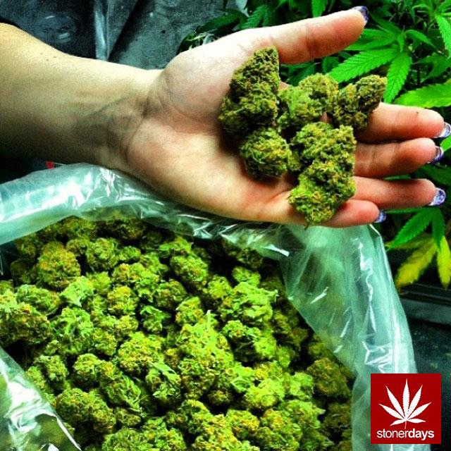 stoners marijuana pot weed stoned sexy stoner (206)