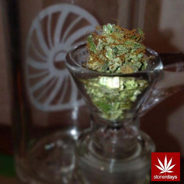 stoners marijuana pot weed stoned sexy stoner (222)