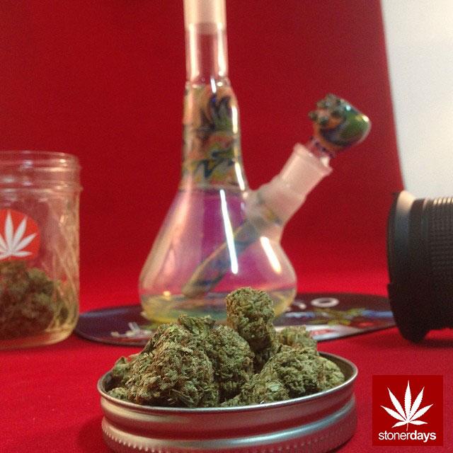 stoners marijuana pot weed stoned sexy stoner (254)