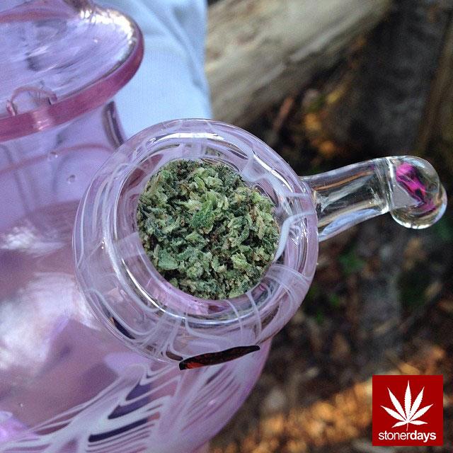 stoners marijuana pot weed stoned sexy stoner (257)