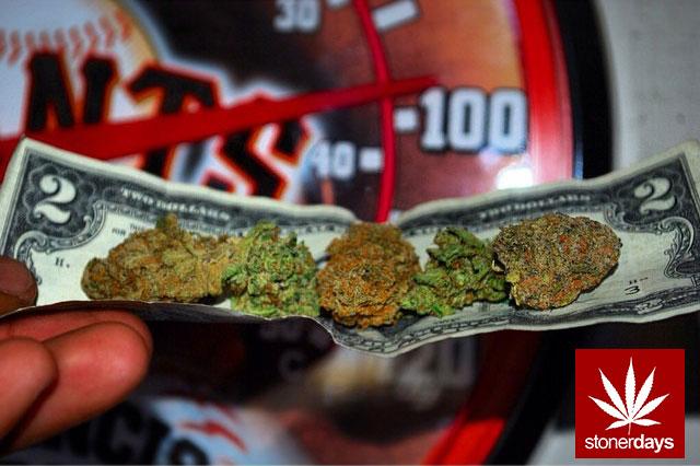 stoners marijuana pot weed stoned sexy stoner (261)