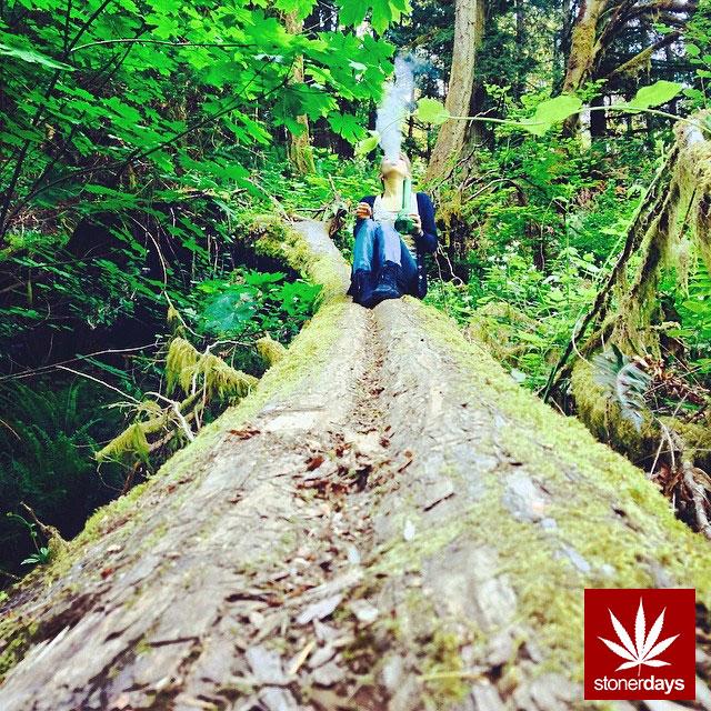 stoners marijuana pot weed stoned sexy stoner (288)