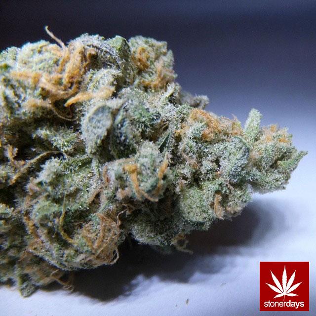 stoners marijuana pot weed stoned sexy stoner (297)