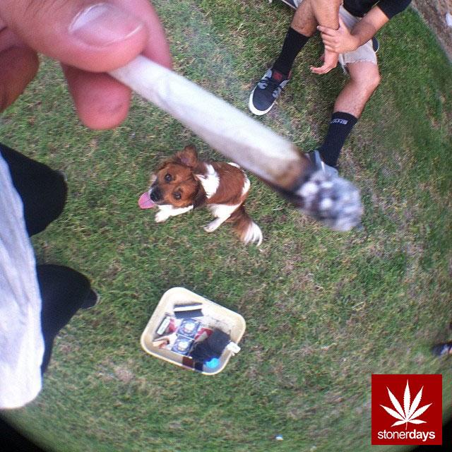 stoners marijuana pot weed stoned sexy stoner (298)