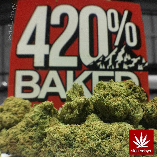 stoners marijuana pot weed stoned sexy stoner (301)