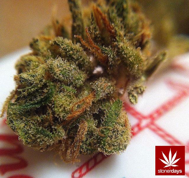 stoners marijuana pot weed stoned sexy stoner (353)