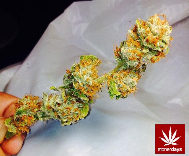 stoners marijuana pot weed stoned sexy stoner (358)