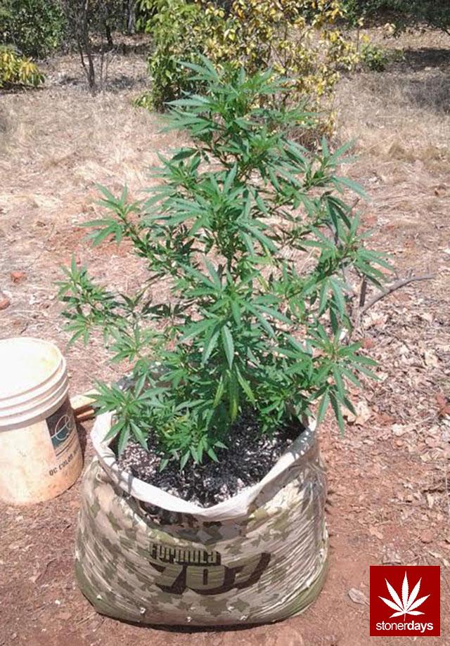 stoners marijuana pot weed stoned sexy stoner (369)