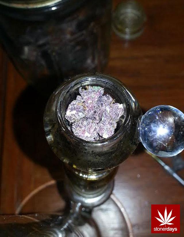 stoners marijuana pot weed stoned sexy stoner (373)