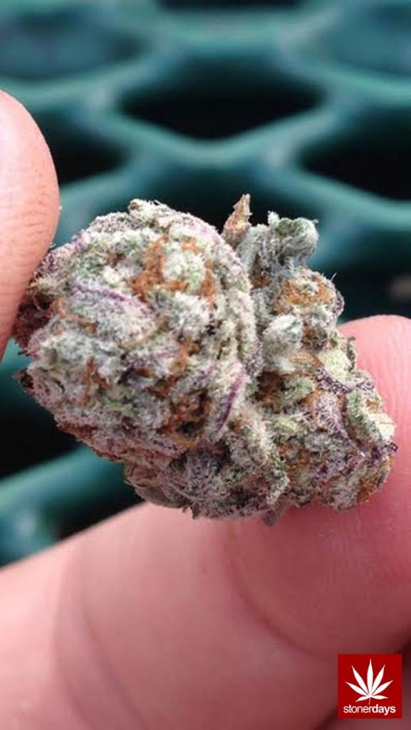 stoners marijuana pot weed stoned sexy stoner (379)