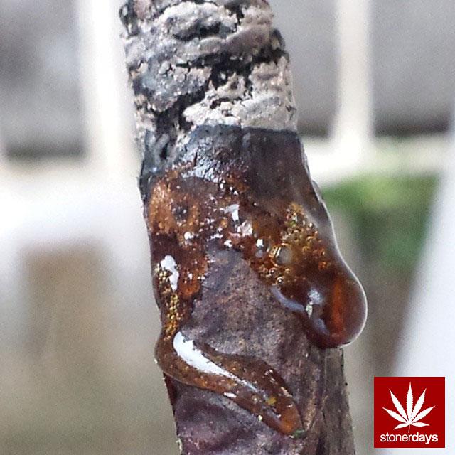 stoners marijuana pot weed stoned sexy stoner (386)
