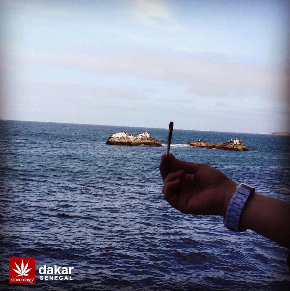 Senegal-Dakar-Mamelles-marijuana
