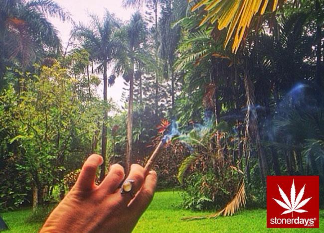 blunts-bongs-marijuana-pot-stonerdays (214)