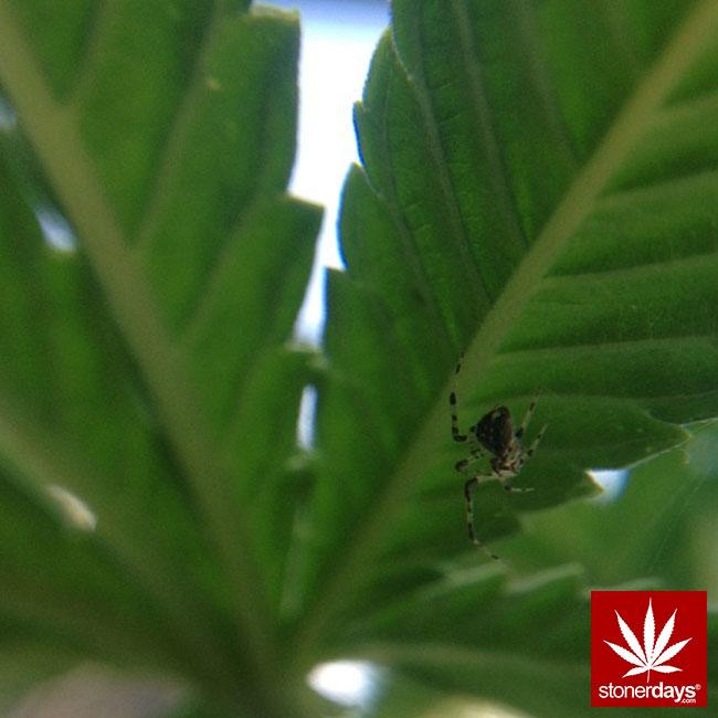 blunts-bongs-marijuana-pot-stonerdays (293)