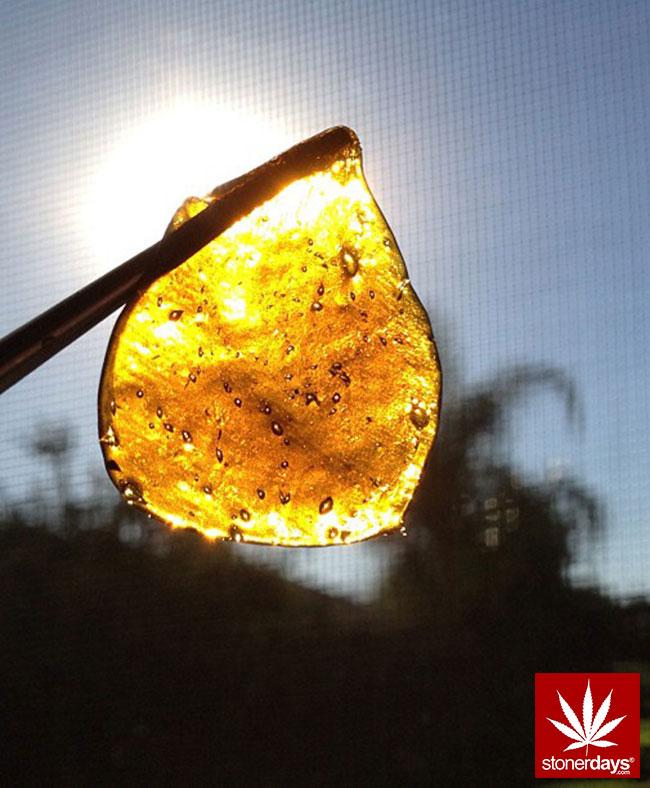 blunts-bongs-marijuana-pot-stonerdays (297)