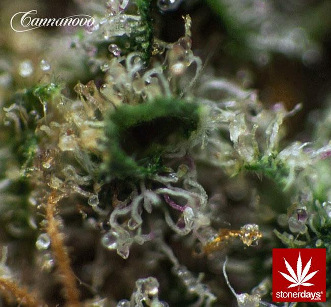 blunts-bongs-marijuana-pot-stonerdays (321)