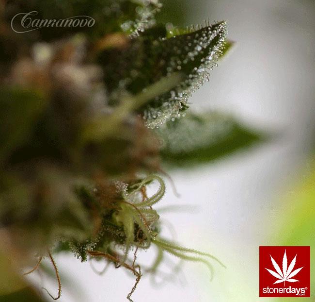 blunts-bongs-marijuana-pot-stonerdays (336)