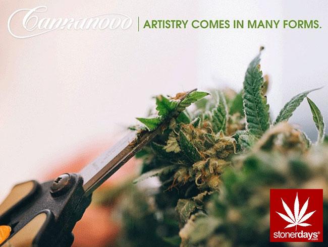 blunts-bongs-marijuana-pot-stonerdays (341)