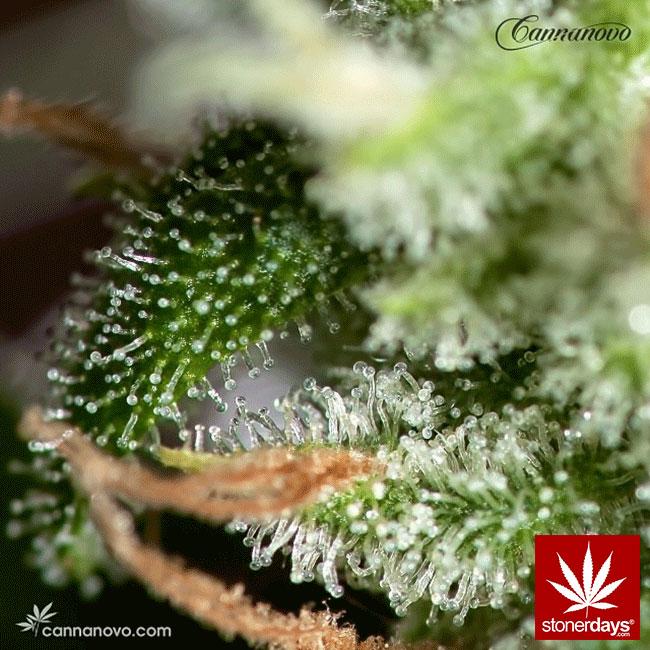 blunts-bongs-marijuana-pot-stonerdays (343)