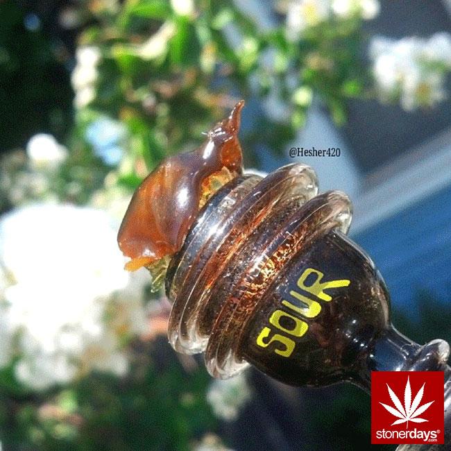 blunts-bongs-marijuana-pot-stonerdays (383)
