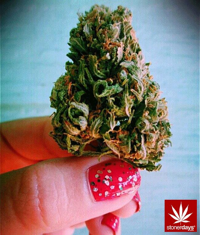blunts-bongs-marijuana-pot-stonerdays (441)