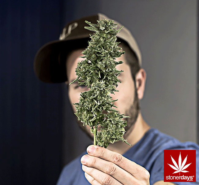 blunts-bongs-marijuana-pot-stonerdays (448)