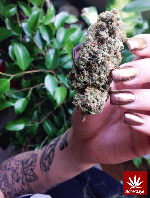 blunts-bongs-marijuana-pot-stonerdays (563)