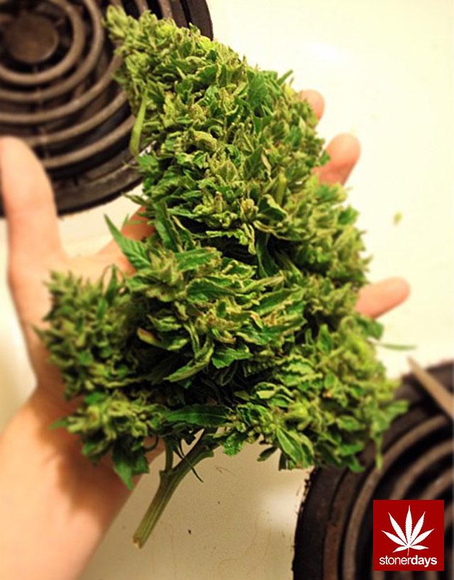 stonerdays-stayblazed-marijuana-pipes-joints-blunts-weed (180)