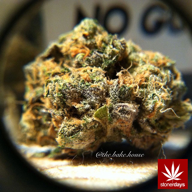 stonerdays-stayblazed-marijuana-pipes-joints-blunts-weed (195)