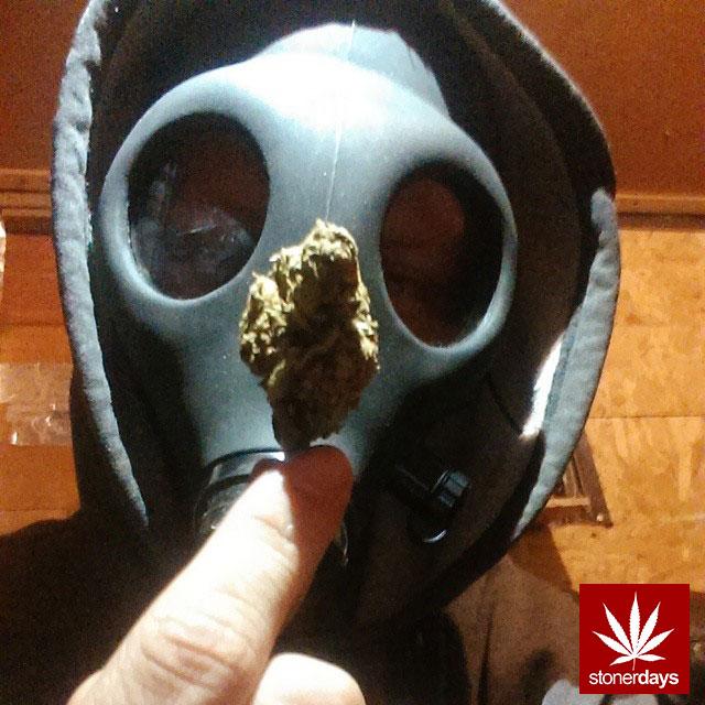stonerdays-stayblazed-marijuana-pipes-joints-blunts-weed (197)