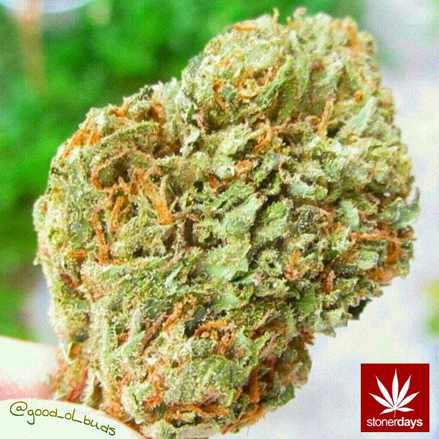 stonerdays-stayblazed-marijuana-pipes-joints-blunts-weed (211)