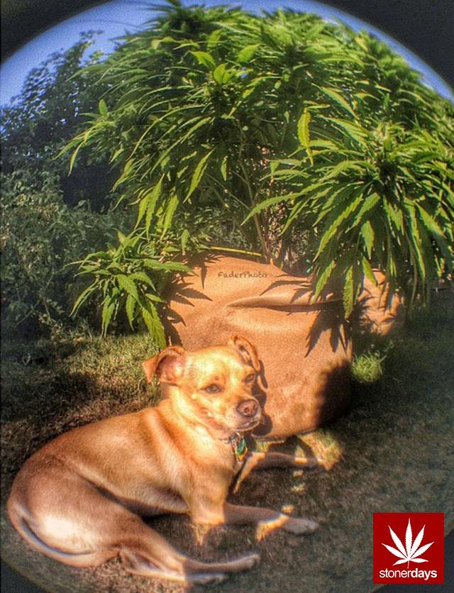 stonerdays-stayblazed-marijuana-pipes-joints-blunts-weed (222)