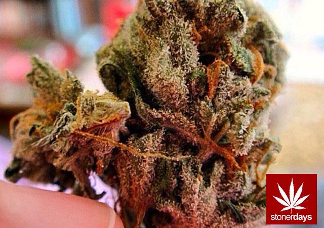 stonerdays-stayblazed-marijuana-pipes-joints-blunts-weed (37)