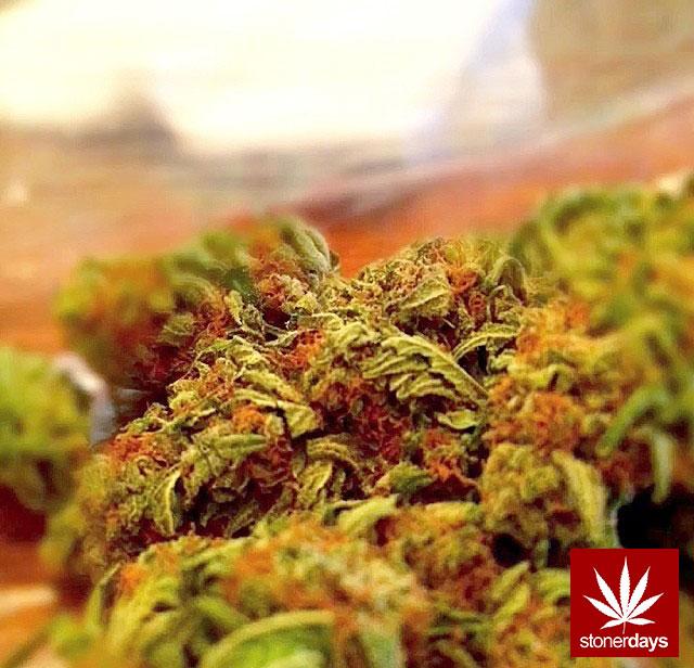 stonerdays-stayblazed-marijuana-pipes-joints-blunts-weed (50)