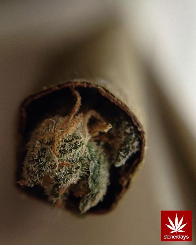 stonerdays-stayblazed-marijuana-pipes-joints-blunts-weed (6)