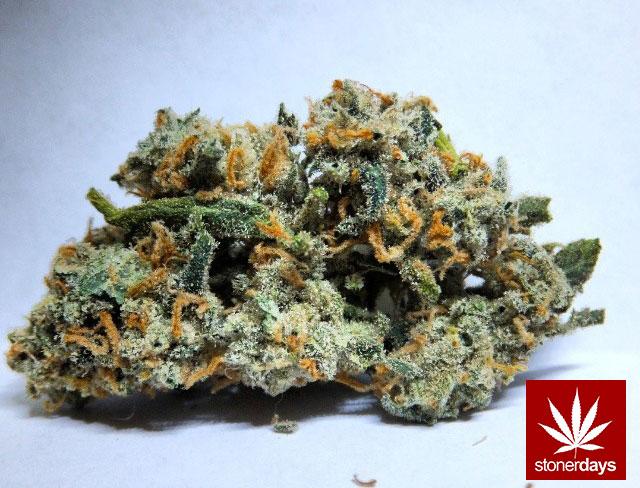 stonerdays-stayblazed-marijuana-pipes-joints-blunts-weed (63)