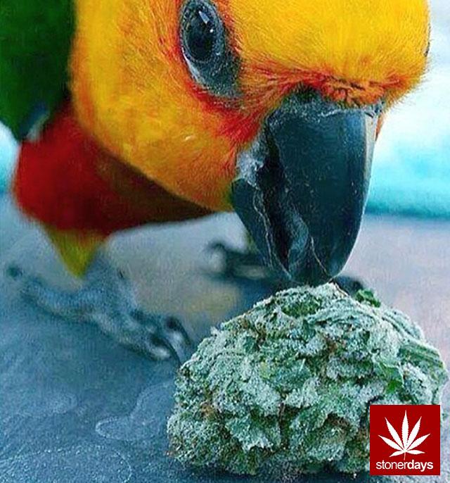 stonerdays-stayblazed-marijuana-pipes-joints-blunts-weed (74)